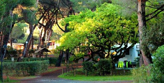 Le Esperidi Village : quercia