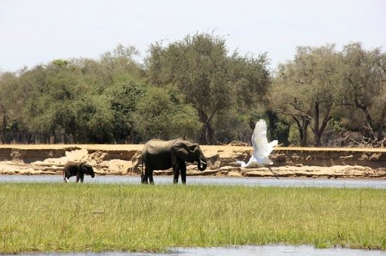 Chikwenya Safari Lodge:                   Going fishing