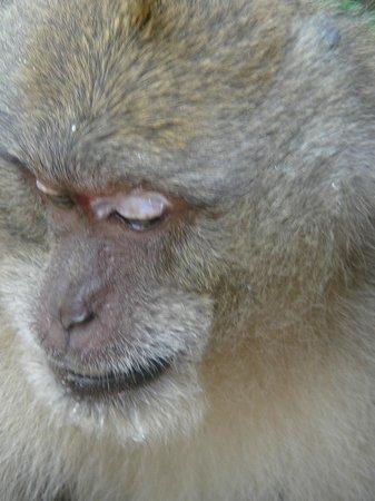 بامبو باي ريزورت:                   Monkey at road side enroute to Bamboo Bay                 