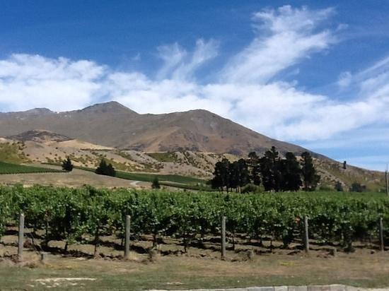 Peregrine Wines :                   Peregrine vineyard