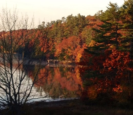 Wabi Sabi Cottage: Fall View