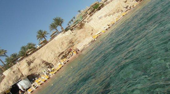 Hilton Sharks Bay Resort:                                     looking back at hotel