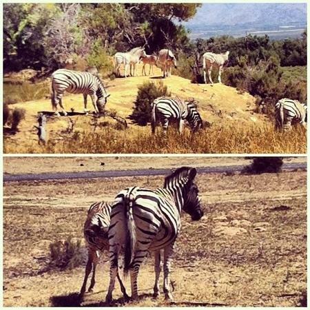 Mytours Day Tours:                   Safari Tour