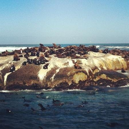 Mytours Day Tours:                   Seal Island @ Hout Bay