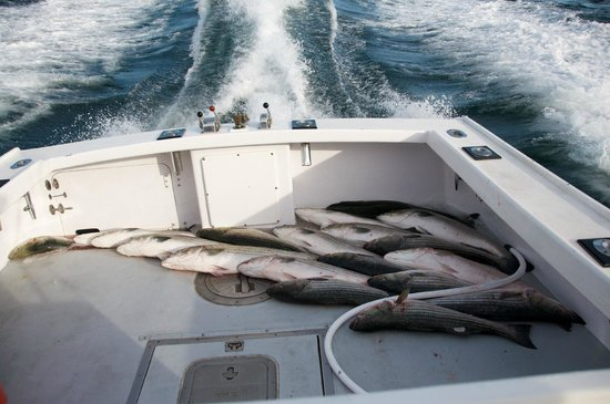 Magellan Sportsfishing Charters :                   Peter Mac
