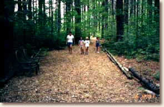 Laurelwood Inn: Cashiers Walking Trail goes right through our property