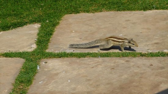 Trident, Agra:                   Wildlife