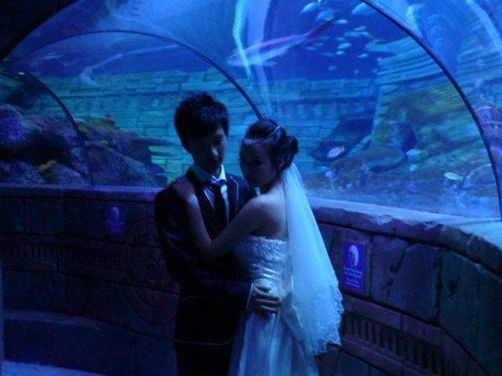 Lido di Jesolo Sea Life Aquarium : Sposi a SEA LIFE