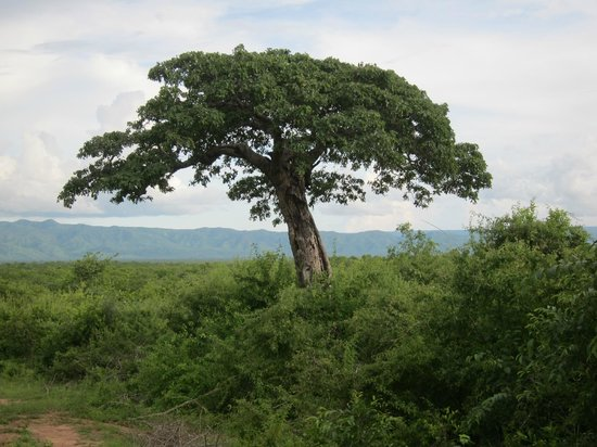 Rhino Safari Camp:                   Wonderful views, picture of Africa