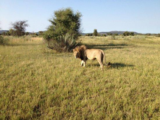 Morukuru Family Madikwe :                                     the king