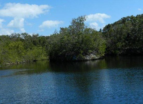 Dagny Johnson Key Largo Hammock Botanical State Park:                                     Beautiful water ways