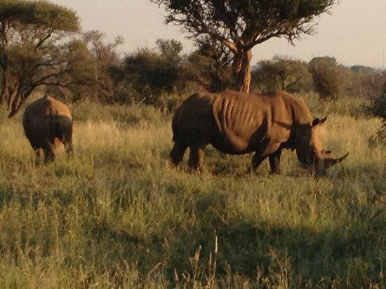 Morukuru Family Madikwe:                                     Rhinos