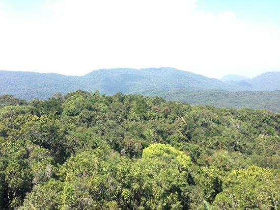 Sinharaja Forest Reserve:                   Amazing views!