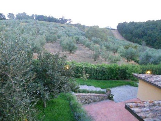 Podere Campolivo:                   l'abbraccio degli ulivi