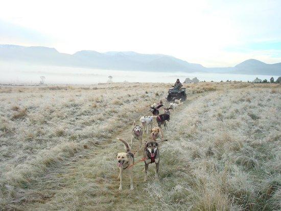 Cairngorm Sleddog Centre:                                     Early morning training run