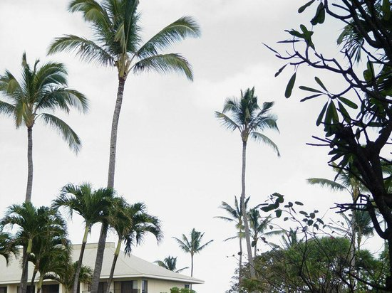 Kauai Beach Resort:                                     The Grounds