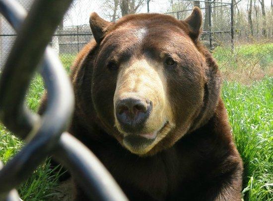 Noah's Ark Rehabilitation Center: Big bear