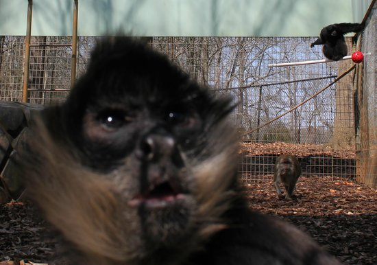 Noah's Ark Rehabilitation Center: Primates