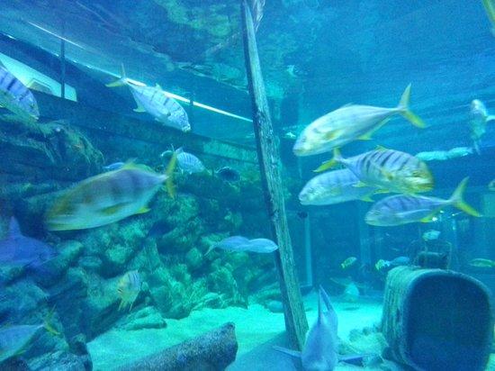 requin picture of seaquarium le grau du roi tripadvisor