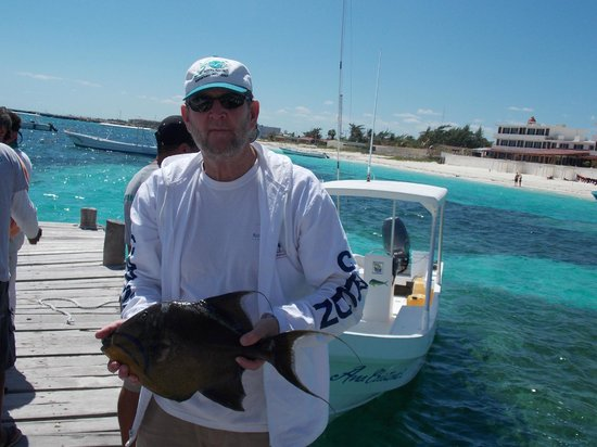 Diving Dog Tours:                   The Triggerfish I caught