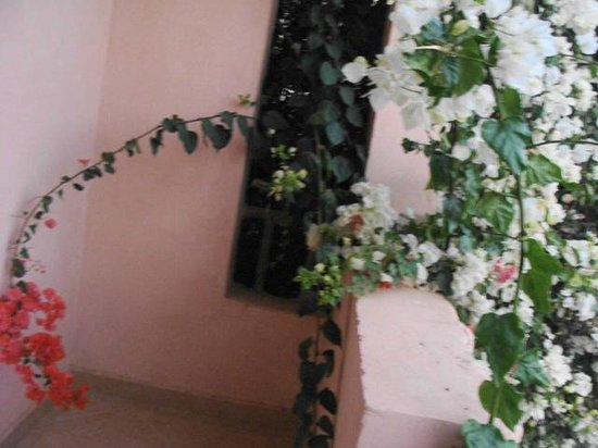 Blue Lagoon Marsa Alam:                                                       nostro balcone ricoperto di fiori