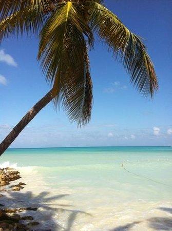 Siboney Beach Club:                   Dickson Bay