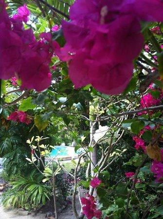 Siboney Beach Club:                   Garten mit Pool