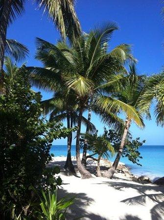 Siboney Beach Club:                   Siboney Beach, direkt am Hotel!