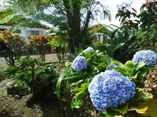 Hotel Villas Vilma: Flores