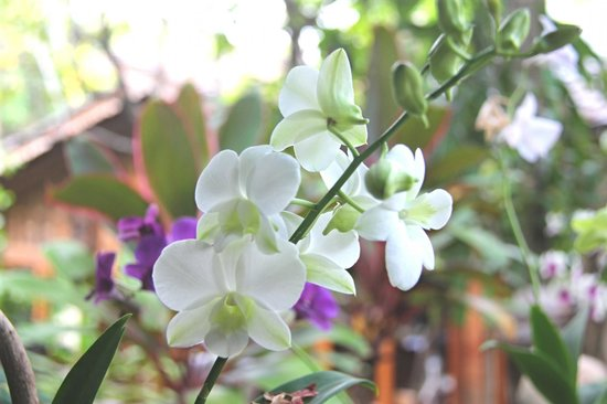 Santhiya Koh Phangan Resort & Spa: Lovely flowers everywhere