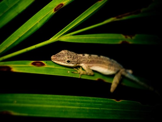 写真Arenal Oasis Wildlife Refuge枚