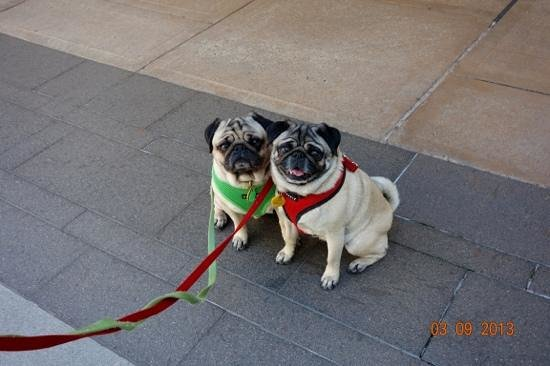 Menlo Park Mall Dog Photos