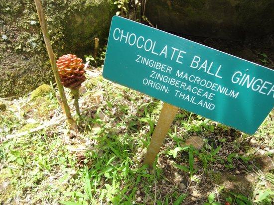Hawaii Tropical Botanical Garden: Love the name