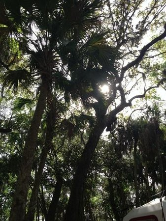 Manatee Hammock Campground : a view through the trees