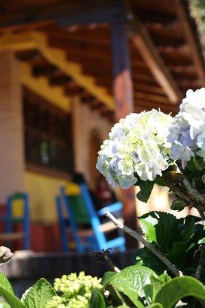Hotel Huerta Real: Hortensias