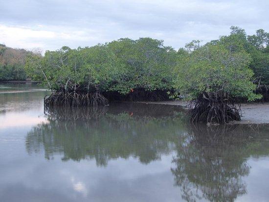 Jendi Seafront Lodge:                                     Mangrove