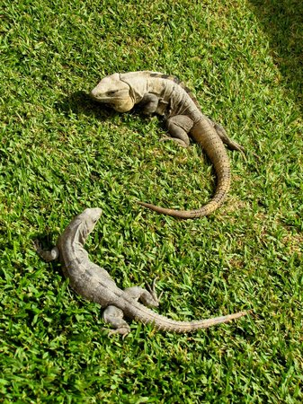Grand Bahia Principe Tulum:                   La fauna local más abundante