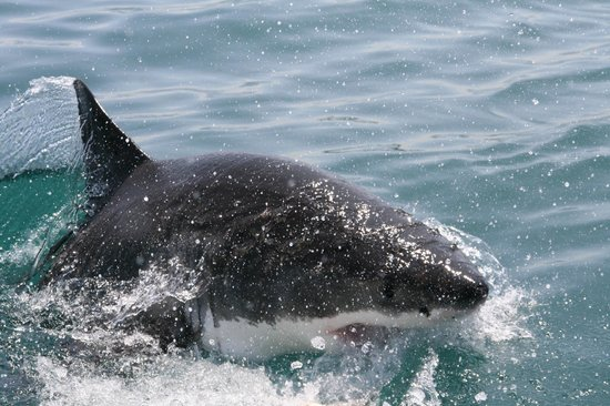 Shark Seekers: Watching each other.