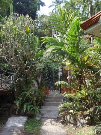 Condotel Las Cascadas:                   tropische Hotelanlage