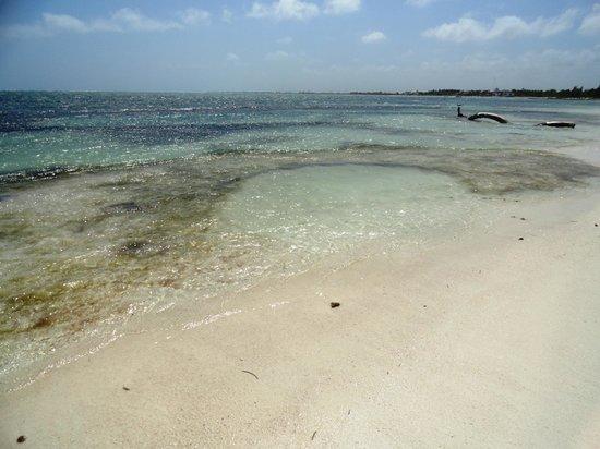 写真Mayan Beach Garden枚