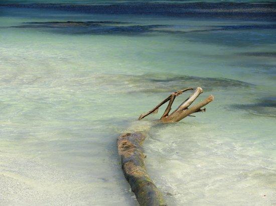 Mayan Beach Garden:                   il mare poco più su