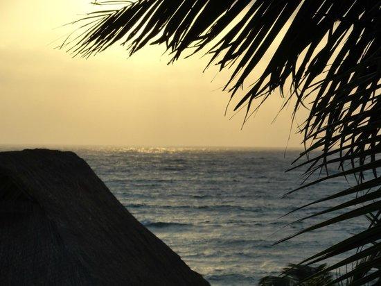 Mayan Beach Garden:                   alba