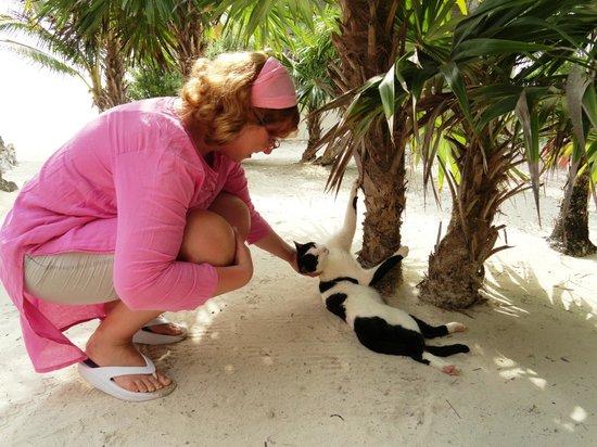 Mayan Beach Garden:                   il bellissimo micio