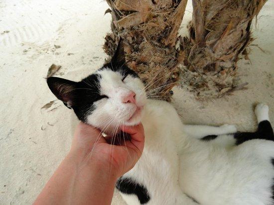 Mayan Beach Garden:                   micio coccolone