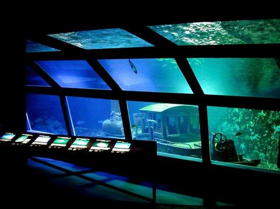 Saint-Gilles-Les-Bains, Reunion Island: Grand bac de 320 000 litres Aquarium de la Réunion