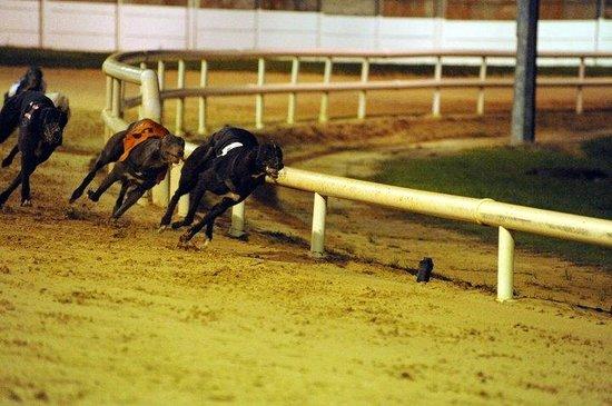 Greyhound Stadium Photo