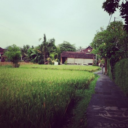 Paddy field that leads to Kebun Indah