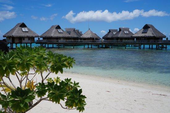 Hilton Bora Bora Nui Resort & Spa:                   ホテルビーチ
