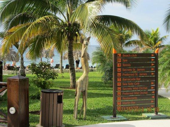 Secrets Wild Orchid Montego Bay:                   sculpture