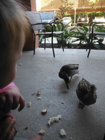 Wyndham Bonnet Creek Resort:                   Feeding ducks on our patio